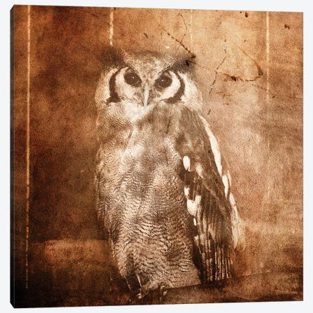 Owl Canvas Print #LFR64} by Linnea Frank Art Print