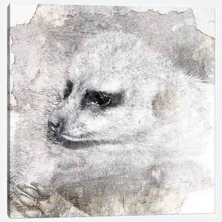 Timon Canvas Print #LFR91} by Linnea Frank Canvas Art Print