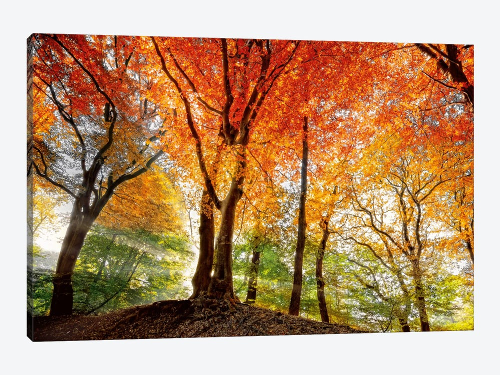 Prism Of Light by Lars van de Goor 1-piece Canvas Print