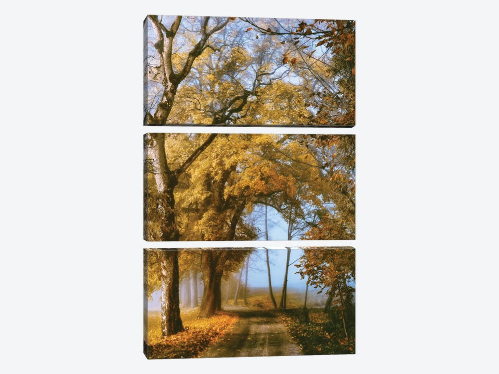 The Road To You by Lars van de Goor 3-piece Canvas Art