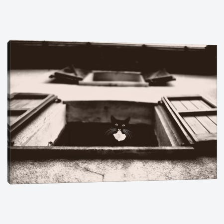 Dali The Cat Canvas Print #LGR15} by Lars van de Goor Canvas Print