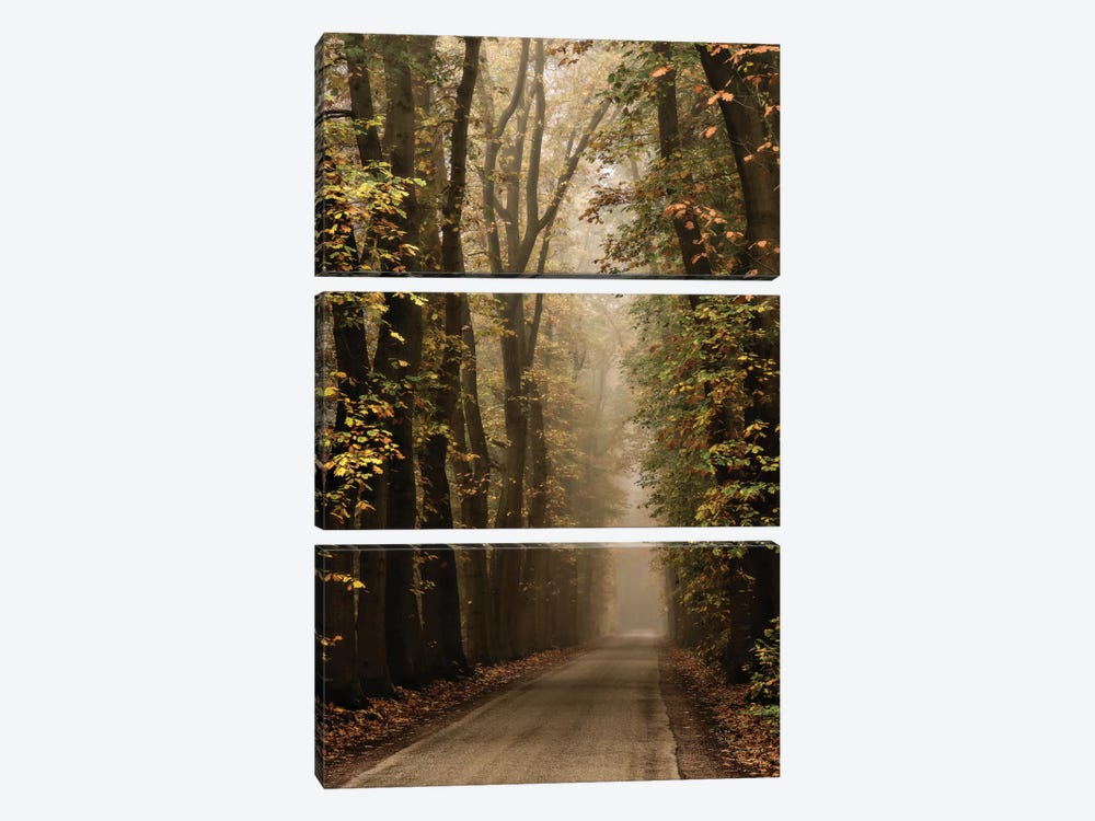 Folia by Lars van de Goor 3-piece Canvas Wall Art