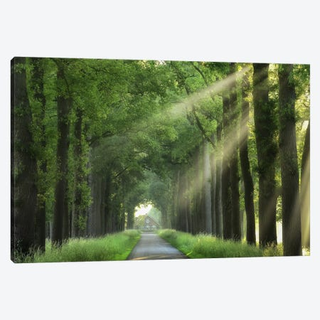 At The End Of My House There Is A Lane Canvas Print #LGR1} by Lars van de Goor Canvas Art Print
