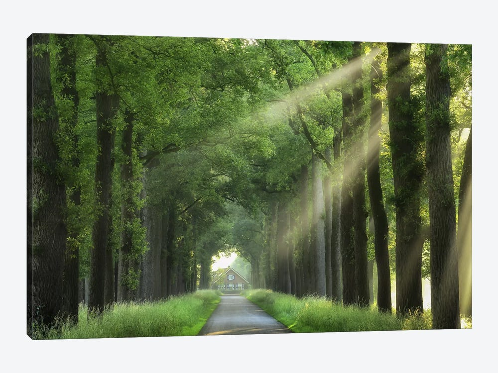 At The End Of My House There Is A Lane by Lars van de Goor 1-piece Canvas Wall Art