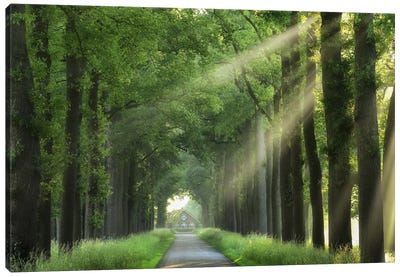 At The End Of My House There Is A Lane Canvas Art Print