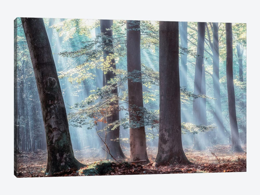 Spellbound by Lars van de Goor 1-piece Canvas Artwork