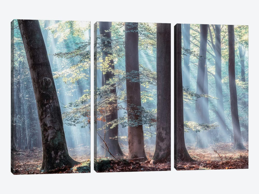 Spellbound by Lars van de Goor 3-piece Canvas Wall Art