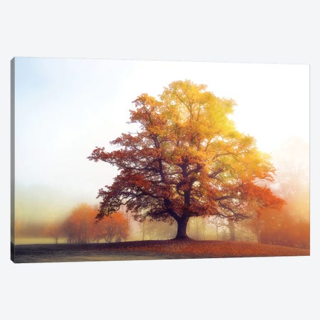 Glowing Warmth Canvas Print #LGR29} by Lars van de Goor Canvas Art Print