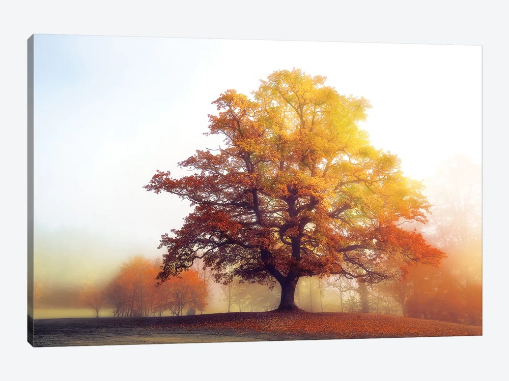 Glowing Warmth by Lars van de Goor 1-piece Canvas Print