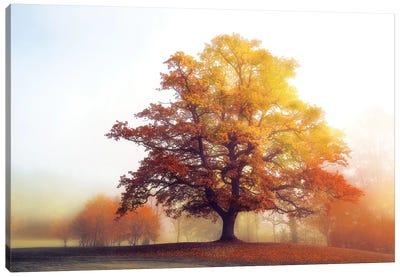 Glowing Warmth Canvas Art Print