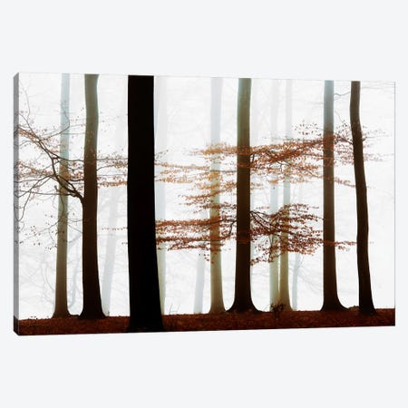 Forest Whispers Canvas Print #LGR2} by Lars van de Goor Canvas Print