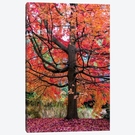 Marvelous Maple Canvas Print #LGR30} by Lars van de Goor Canvas Artwork