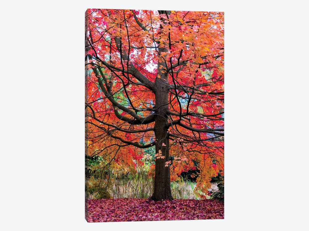 Marvelous Maple by Lars van de Goor 1-piece Canvas Art Print