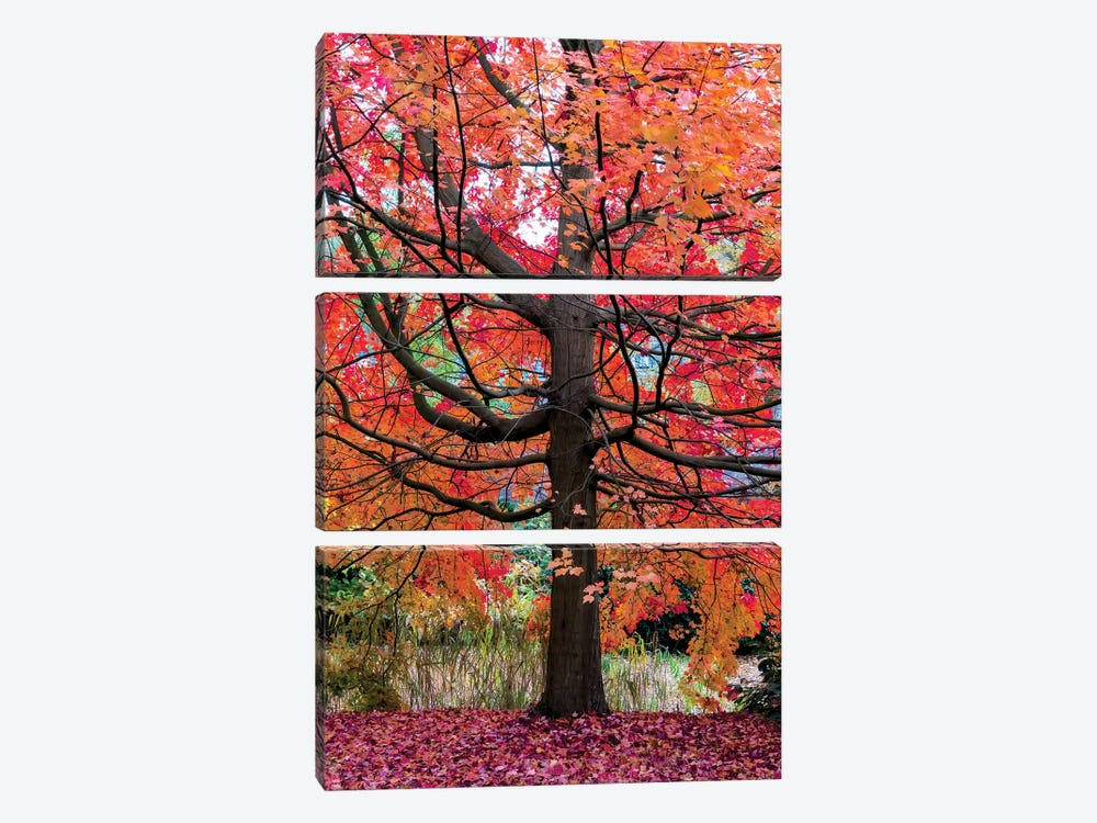 Marvelous Maple by Lars van de Goor 3-piece Canvas Print