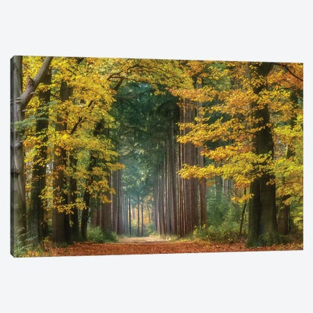 Yellow Gate Canvas Print #LGR32} by Lars van de Goor Canvas Wall Art