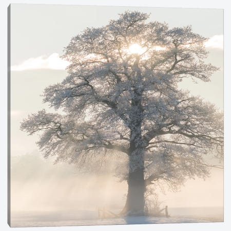 Winter King Canvas Print #LGR34} by Lars van de Goor Canvas Print