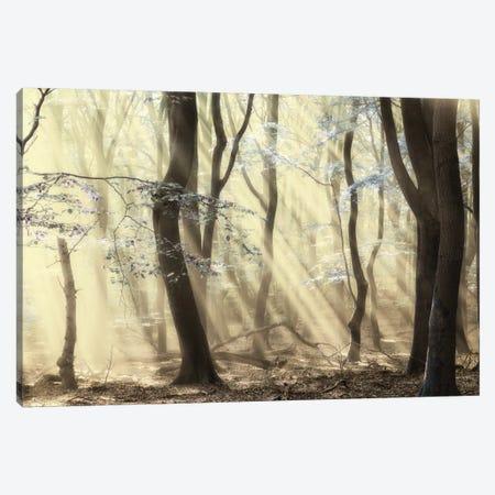 Forest Dimensions Canvas Print #LGR35} by Lars van de Goor Art Print