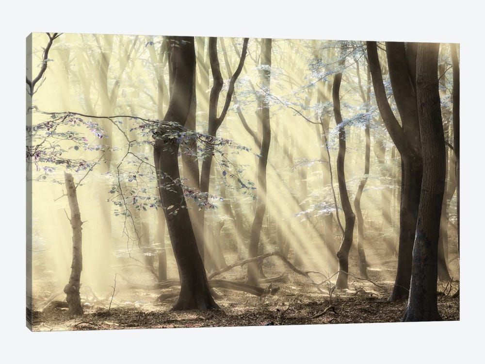 Forest Dimensions 1-piece Canvas Wall Art