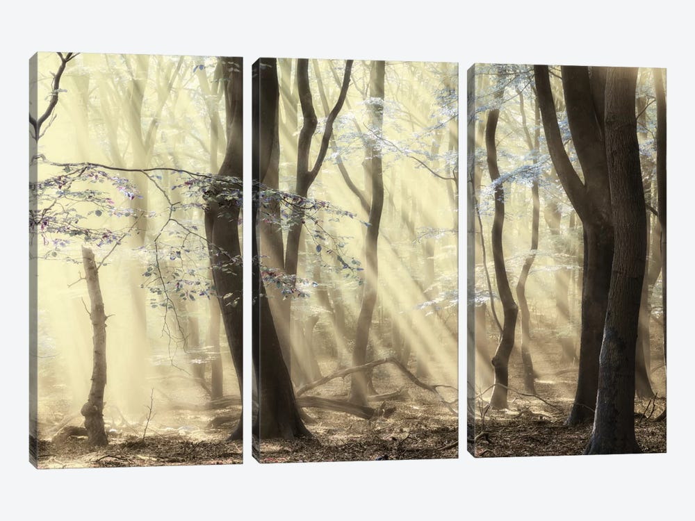 Forest Dimensions 3-piece Canvas Art