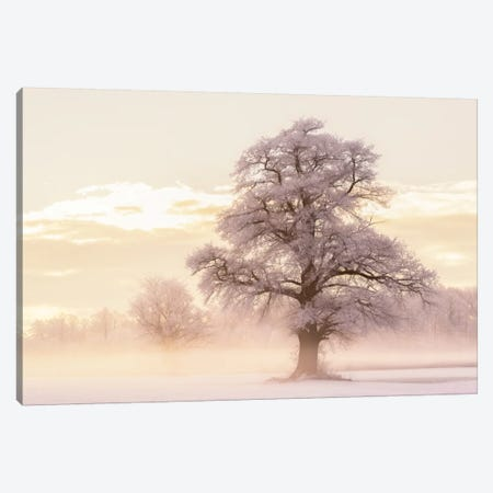 Winter Glow Canvas Print #LGR37} by Lars van de Goor Canvas Print