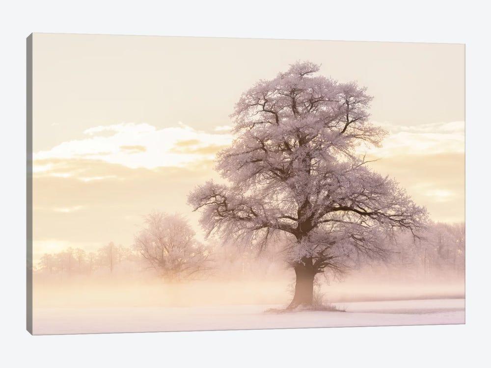 Winter Glow by Lars van de Goor 1-piece Canvas Artwork
