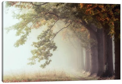 Dawnscratchers Canvas Art Print