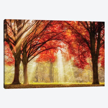 Everland Canvas Print #LGR40} by Lars van de Goor Canvas Print