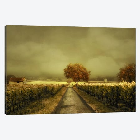 Through The Vineyard Canvas Print #LGR4} by Lars van de Goor Canvas Artwork
