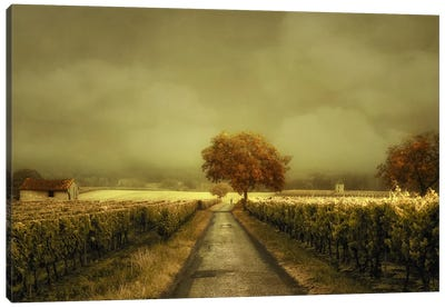 Through The Vineyard Canvas Art Print