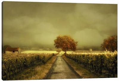 Through The Vineyard Canvas Art Print