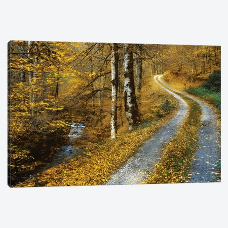 Winding Road Canvas Print #LGR55} by Lars van de Goor Canvas Art Print