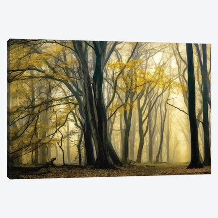 In Love with Golden Fall Canvas Print #LGR62} by Lars van de Goor Art Print