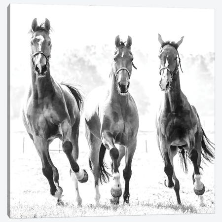Running Herd Canvas Print #LGR66} by Lars van de Goor Canvas Wall Art