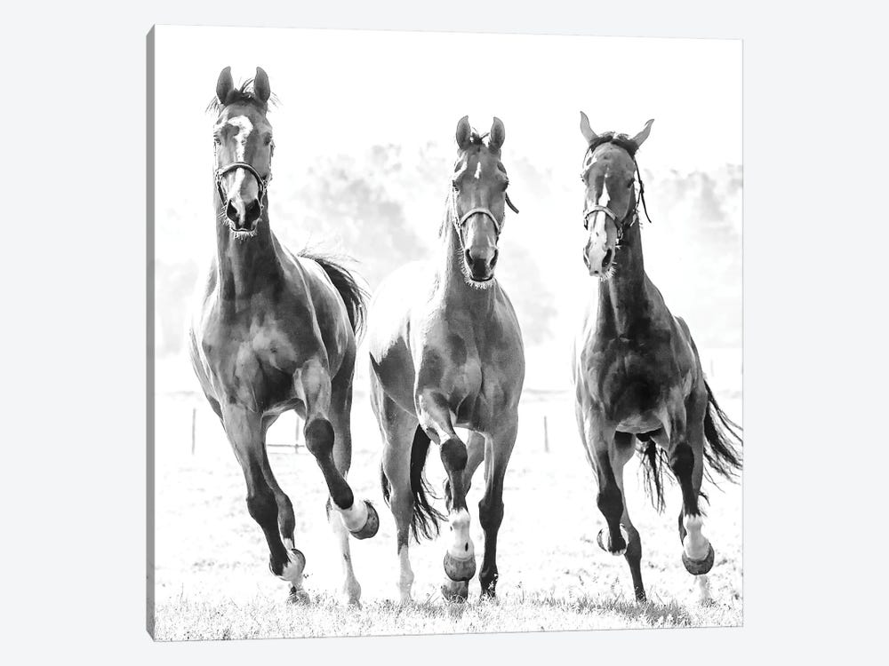Running Herd by Lars van de Goor 1-piece Canvas Wall Art
