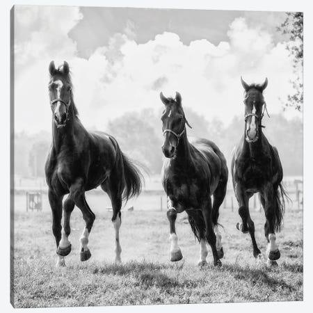 Three of a Kind Canvas Print #LGR68} by Lars van de Goor Canvas Art Print