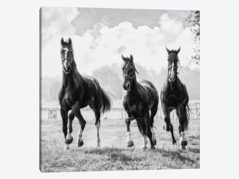 Three of a Kind by Lars van de Goor 1-piece Canvas Art