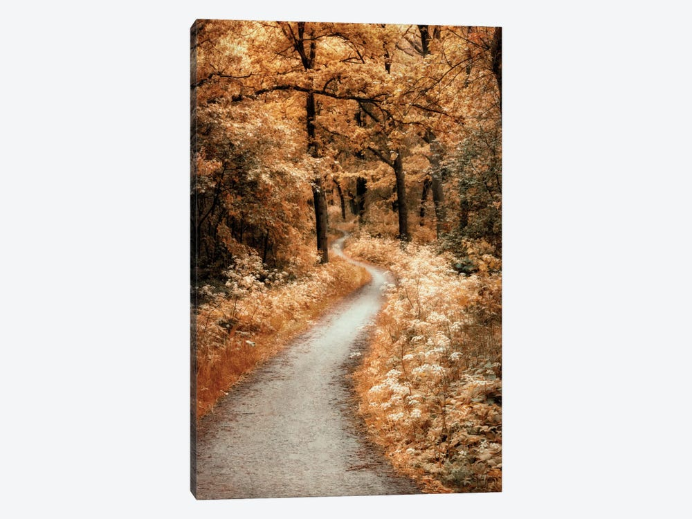 Winding Path by Lars van de Goor 1-piece Canvas Art Print