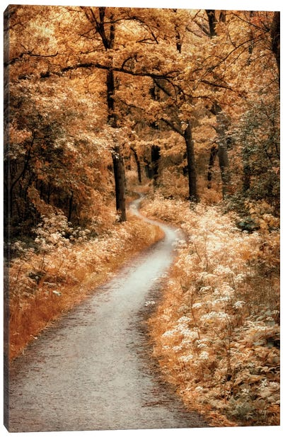 Winding Path Canvas Art Print