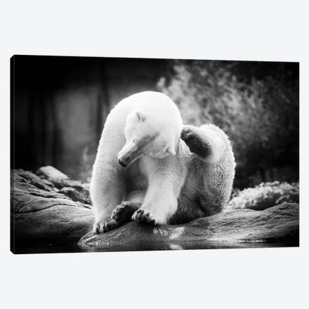Scratching Canvas Print #LGR75} by Lars van de Goor Canvas Art Print