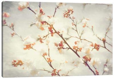 Springly Canvas Art Print