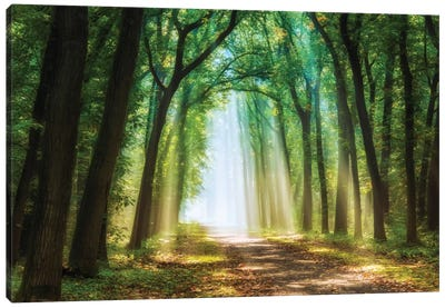 Curtain Of Light Canvas Art Print