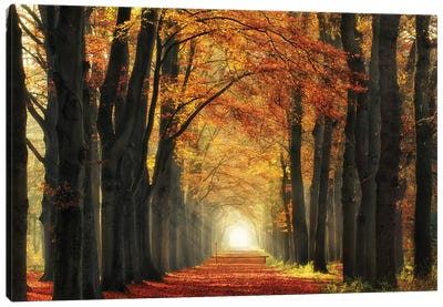 In Love With Fall Again Canvas Art Print