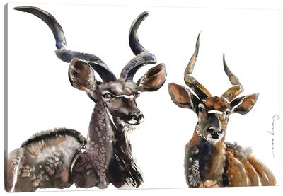 Antelope Charm Canvas Art Print