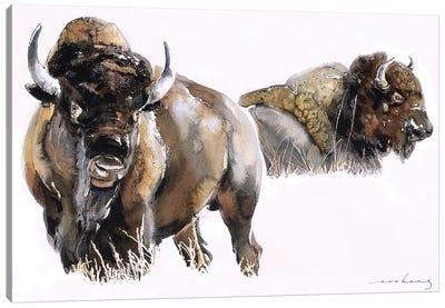 Bisons Canvas Art Print
