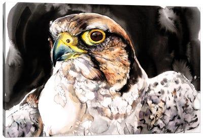 Falcon II Canvas Art Print