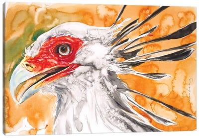 Secretary Bird. Photo courtesy of John Bishop Canvas Art Print