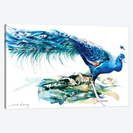 Peacock Splendour II Canvas Print #LIM80} by Soo Beng Lim Art Print