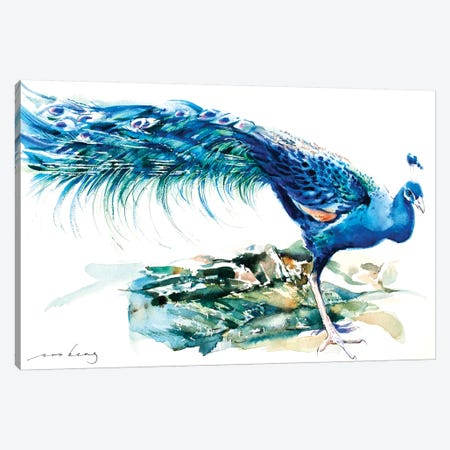 Peacock Splendour II Canvas Print #LIM80} by Soo Beng Lim Art Print