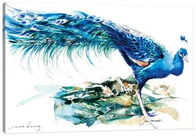 Peacock Splendour II Canvas Art Print