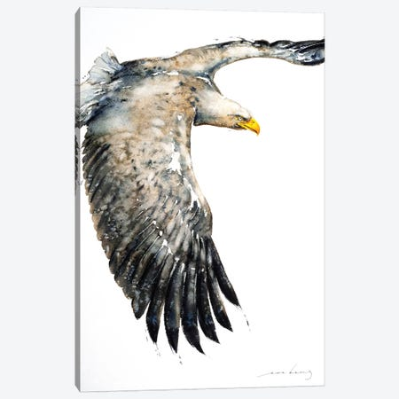 Soar Like Eagle IV Canvas Print #LIM92} by Soo Beng Lim Canvas Wall Art